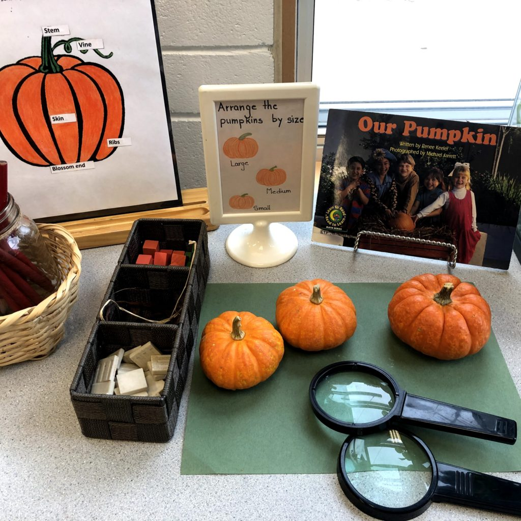 kindergarten pumpkin science and math activity